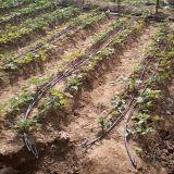 Труба потека оросительной системы потека земледелия