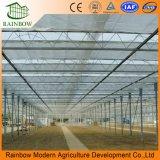 Invernadero comercial dentro del sistema de sombreado de flores y hortalizas para