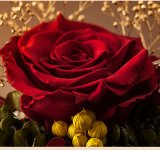 De levering voor doorverkoop bewaarde de Verse Droge Rode Rozen van Bloemen in Koepel