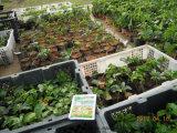 Bio- fertilizzante organico di Unigrow per la piantatura della passiflora commestibile