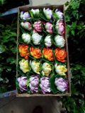 Piante e fiori artificiali di loto 10cm Gu-Jys-0004