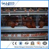 Equipo automático de la jaula del pollo de la capa