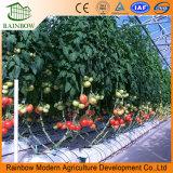 Alta serra alimentata Qualitysolar con il sistema di Hyroponic