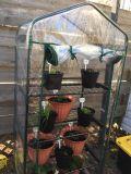 실내 온실 정원 온실 좋은 품질 Portable 온실이 소형 온실에 의하여 DIY 온실 집으로 돌아온다