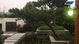 [بريدجلوإكس] [لد] خفيفة [لد] شمسيّة بوابة ضوء حديقة