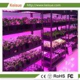 Завод Keisue заводе вертикальной фермы со светодиодной лампы по мере роста