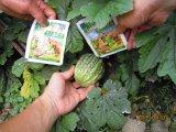 Bio- fertilizzante di Unigrow su qualsiasi piantatura del cetriolo