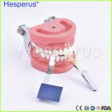 Los colores Luxary Blanqueamiento Dental de embalaje de la sombra de color 3D Guía de comparación con espejo Acelerador de Blanqueamiento Dental