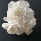 Fiore asciutto di legno di Sola