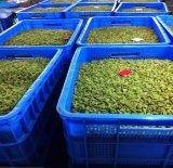 Горячая Продажа свежих культур высококачественный зеленый Seedless изюм