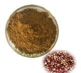 Extrair a porca de Kola Cola acuminata (sementes).
