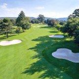 ゴルフ芝生の高品質の速い配達