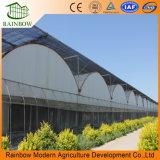 De cama plana del sistema de cultivo hidropónico Nft de efecto invernadero de hortalizas de hoja de película