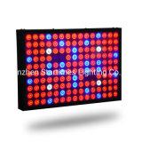 Pianta del LED che coltiva indicatore luminoso 600W