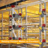 Equipamento Automático de Alimentação de Pássaros para Avicultura de Frango