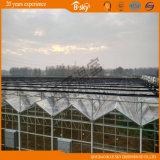 중국 공급자 F 청결한 필름 지붕 유리벽 온실