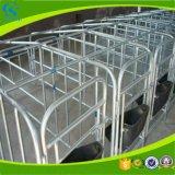 Дешевые клети беременность свиньи оборудования фермы свиньи цены для хавроньи