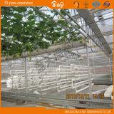 Serre van het Glas van de multi-spanwijdte de Holle voor het Planten van Groenten