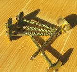 Qualität galvanisierte Regenschirm-Schutzkappen-gewölbte Nägel