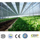 Comitato solare garantito affidabilità a lungo termine 345W di Monocrystyalline