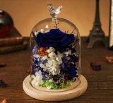 De in het groot Echte Bewaarde Verse Blauwe Rozen van de Bloem in Glas
