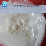 99.35% USP32 처리되지 않는 스테로이드 분말 시험 Isocaproate/테스토스테론 Isocaproate