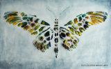 3D壁パネルの装飾の絵画のための多彩な羽デザイン