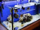 Hoge LEIDENE van de Helderheid Staaf, die voor de Tanks van Vissen aansteken