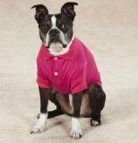Perro Polo Tshirt ropa Productos PET