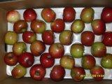 Nueva cosecha Jiguan rojo Apple con el embalaje del cartón