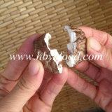 Fungo di Shiitake secco selvaggio naturale autentico con la striscia di colore del tè