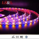 Color blanco caliente de la luz ambarina que cambia el fabricante del Striplight del LED