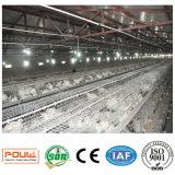 Nuovo sistema della gabbia del pollo da carne per l'azienda avicola (un tipo)