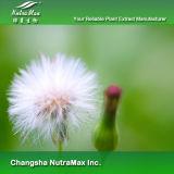 100% натуральные Dandelion извлечения (5 - 1, 10: 1 извлеките порошок)