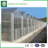 Invernaderos multi de /Polycarbonate de la hoja de la PC del palmo de la agricultura para las plantas