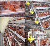 Machines de ferme de matériel d'aviculture avec des buveurs de raccord