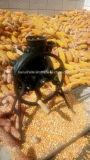 Batteuse de maïs de main pour l'exportation