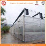 Garten/Landwirtschaft des Tunnel-Polycarbonat-Blatt-grünen Hauses für Gemüse-/Blumen-wachsendes