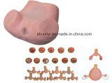 教授のモデルX-YF55配達および母性的な、新生児の緊急のシミュレーター