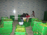 Unidad de refrigeración de la cámara fría del almacenaje del alimento