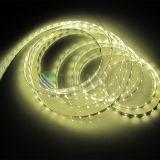 Alta qualidade 2835 LED Strip 240LEDs IP20 com bom preço