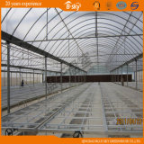 Polycarbonate Sheet Wall를 가진 필름 Roof Greenhouse
