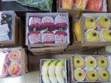 Planta e flor artificiais das frutas artificiais Gu-Jy601155433