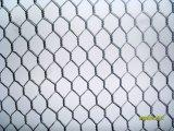 Maglia esagonale galvanizzata del nastro metallico del pollo