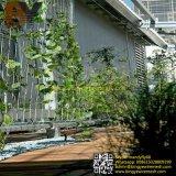 ステンレス鋼ロープの緑の壁の景色及び緑化プラント上昇の網