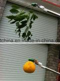 albero della prugna di 180cm Palo che pota estensione lunga Pruner