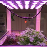 Pläne LED wachsen helles AC100-240V