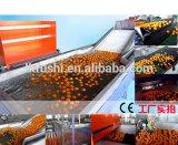 Frutas e Produtos Hortícolas e cera de lavagem e de secagem da máquina de ordenação