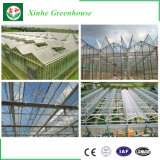 Transparentes Großhandelspolycarbonat-Aluminiumtomate-Gewächshaus