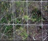 高い安全性の牛塀/牧草地の塀/シカ/馬/ヒツジ